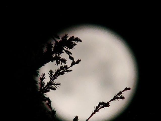 七夕盼月圆