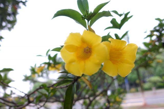 春天的花儿