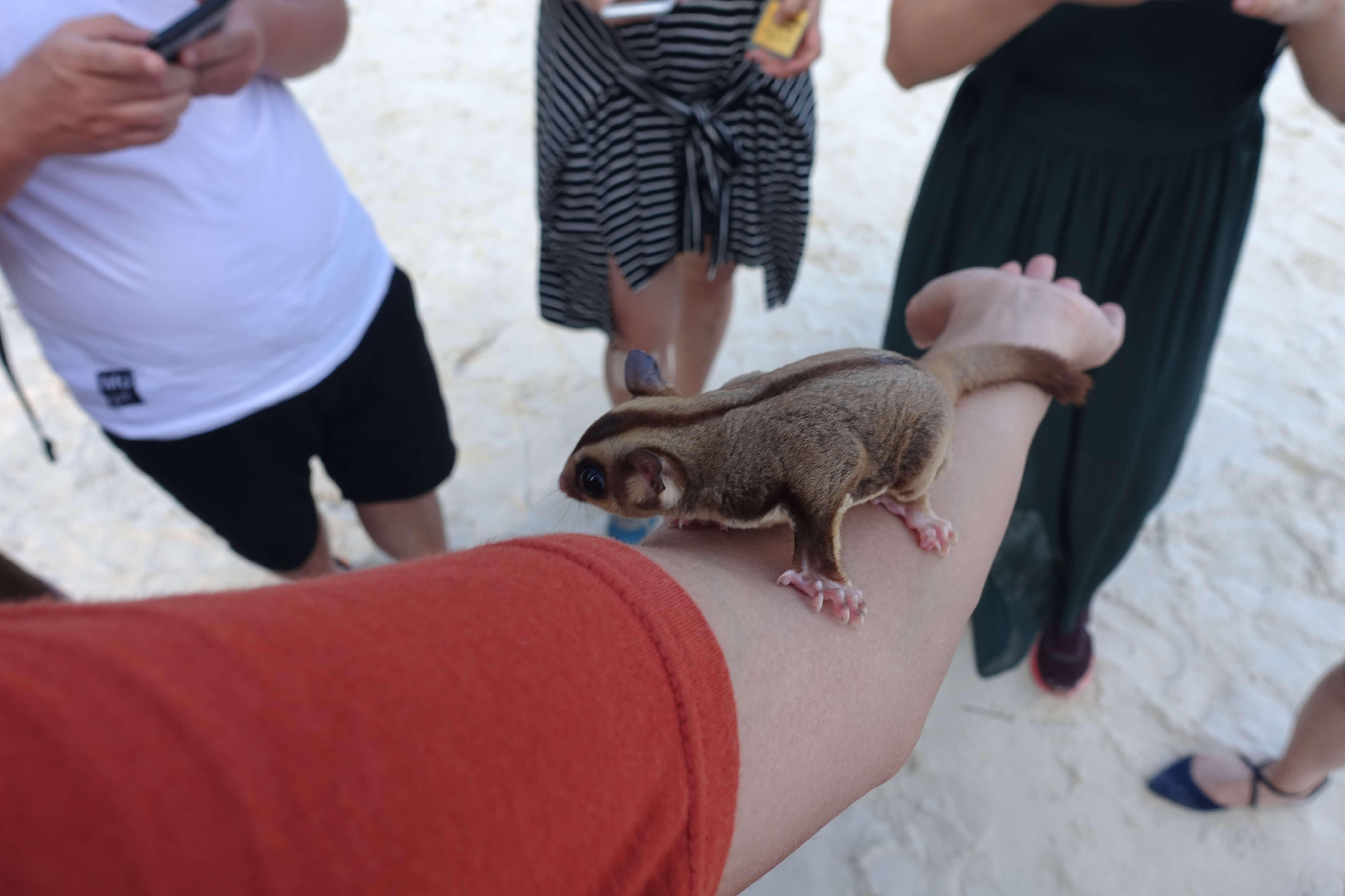 岛上总有可爱的小动物