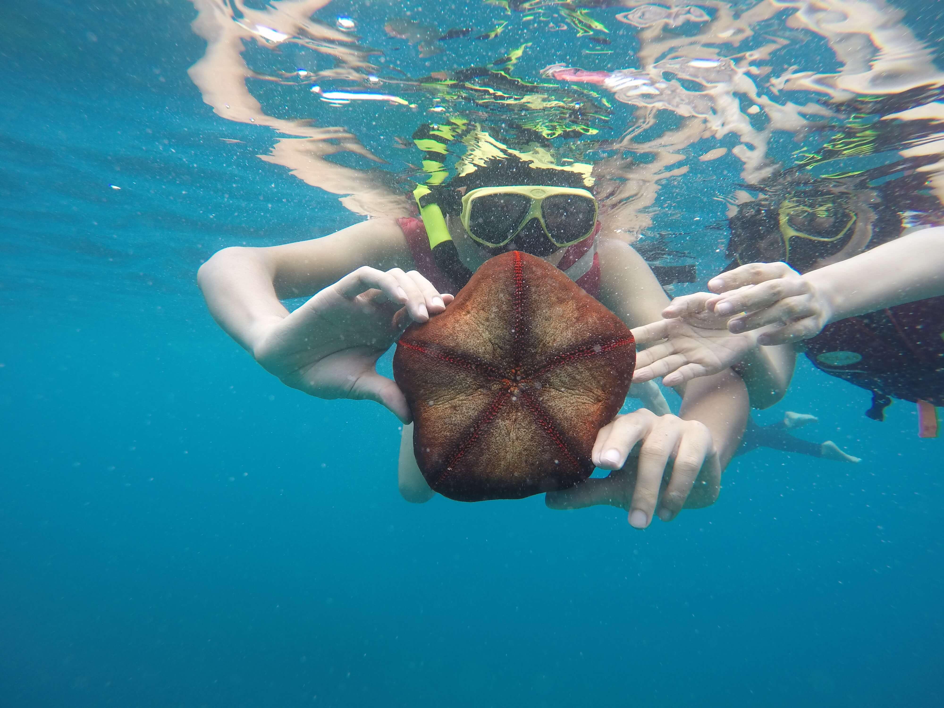 浮潜时遇到的海星