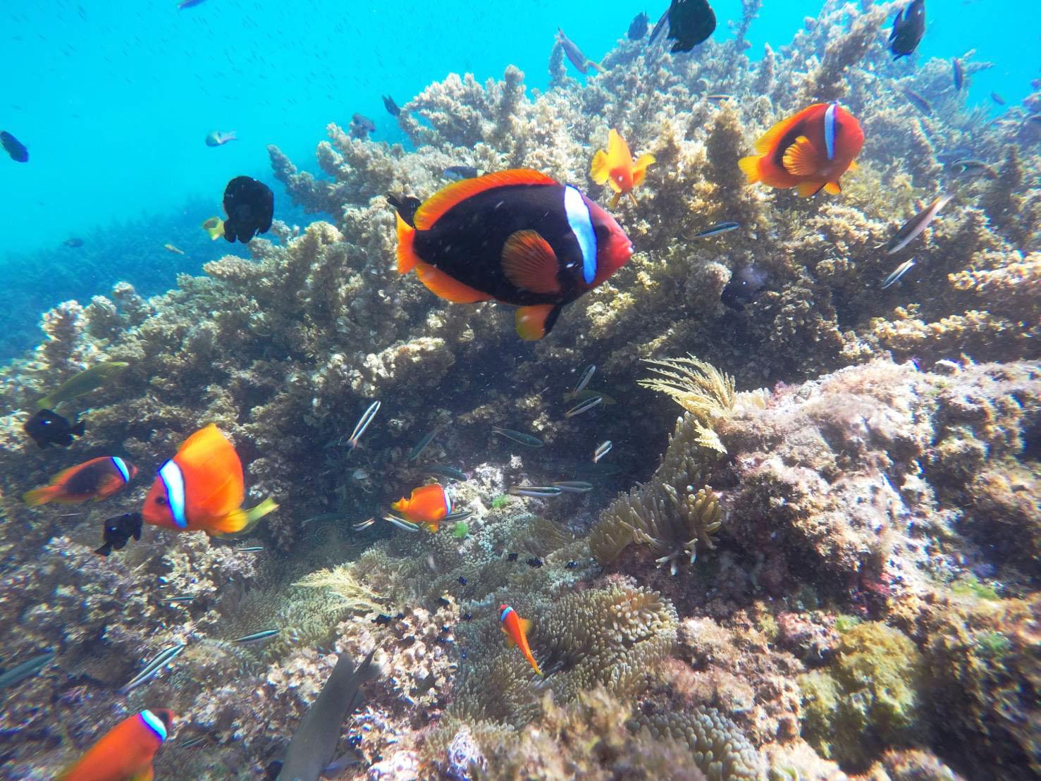 垦丁浮潜的鱼儿